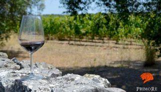 primo-re-vineyard